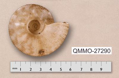 Nautiliropa omicron