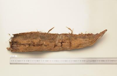 Regalecus glesne
