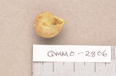 Helicina insularum